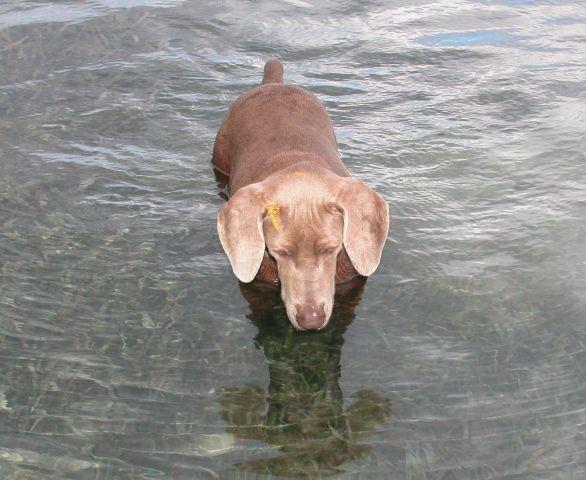 Roatan honduras for Water dog fish